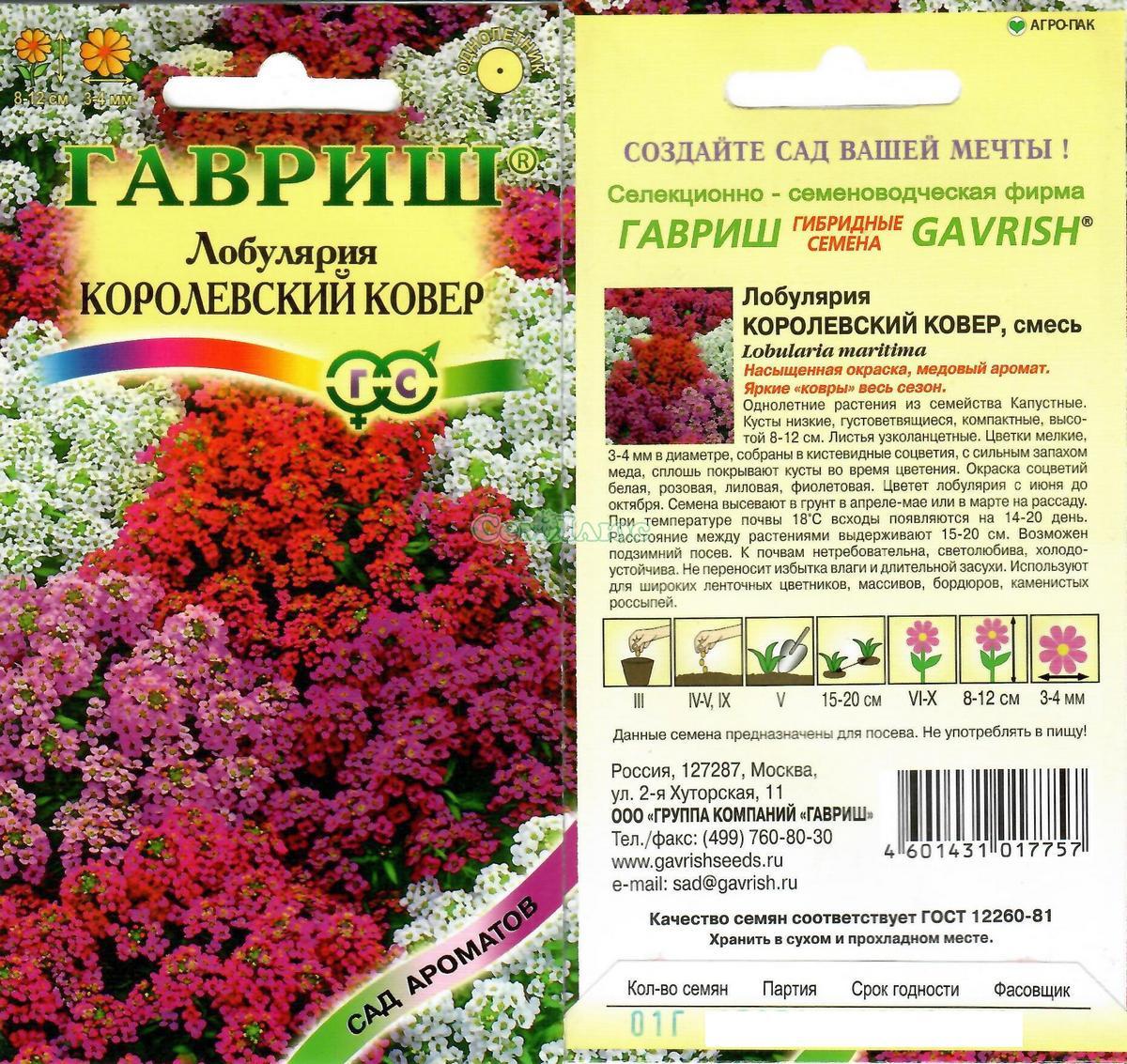 Выращивание лобулярии из семян