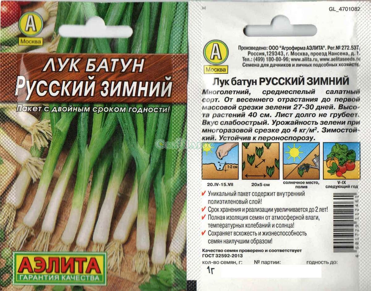 Лук батун русский зимний выращивание из семян 26